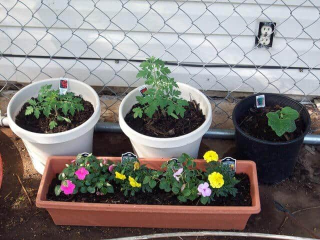 Container Garden Protection