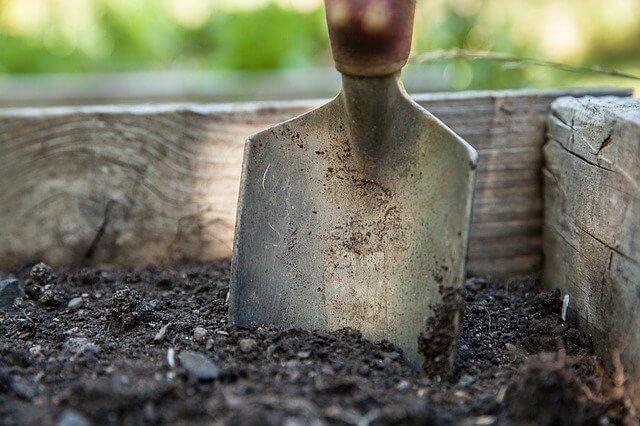 prepare peony soil
