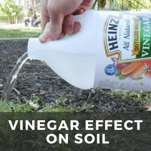 Vinegar Effect on soil FI